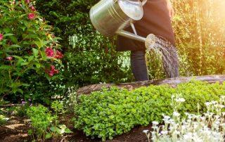 Récupérateur d'eau domestique 79